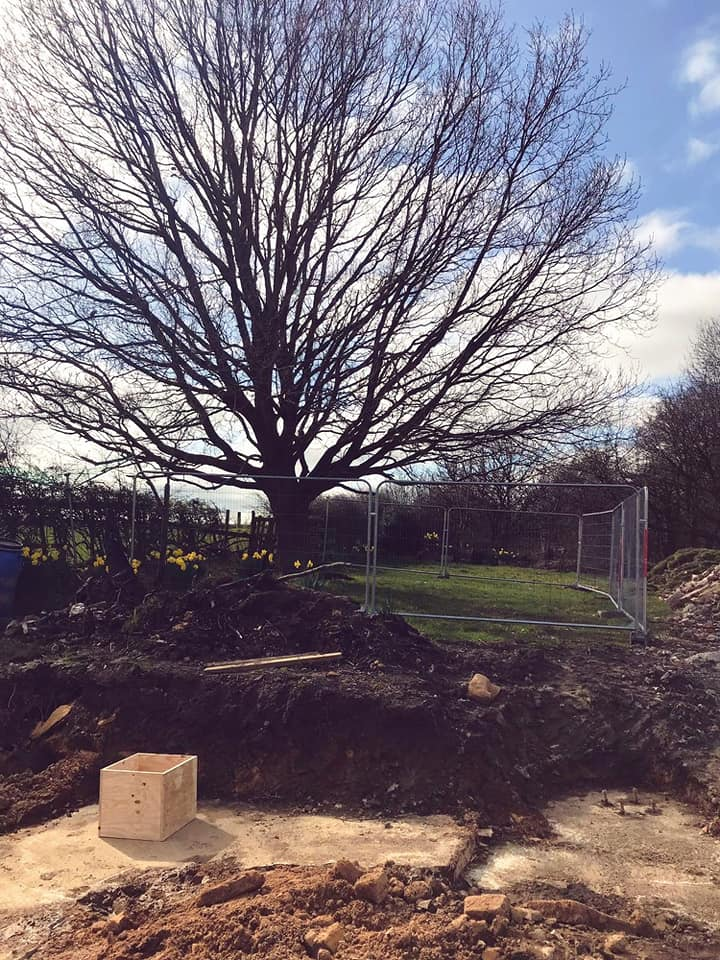 Making sure we look after our much loved Oak Tree